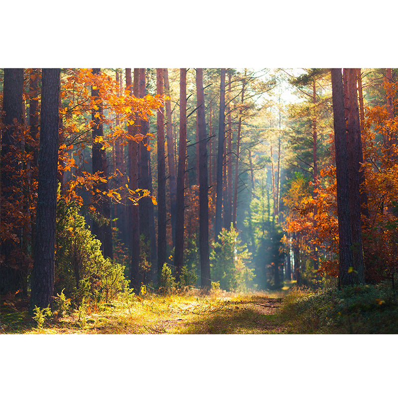 Autumn Forest freeshipping - Beautiful Spaces Store