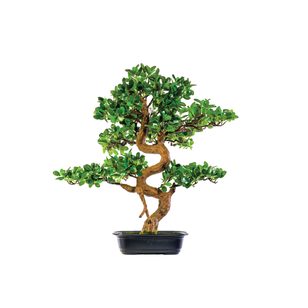 Bonsai Tree 68cm freeshipping - Beautiful Spaces Store