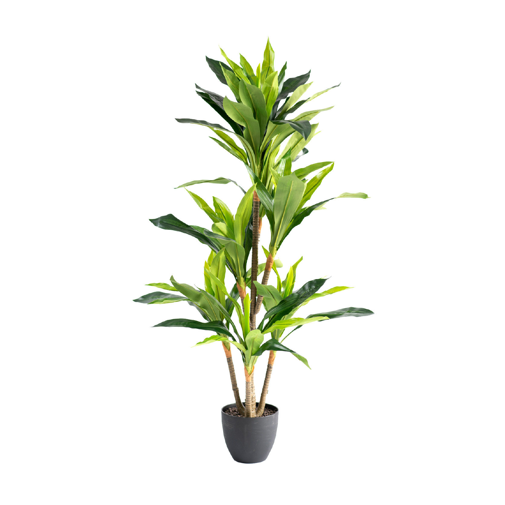 Dracaena 130cm freeshipping - Beautiful Spaces Store