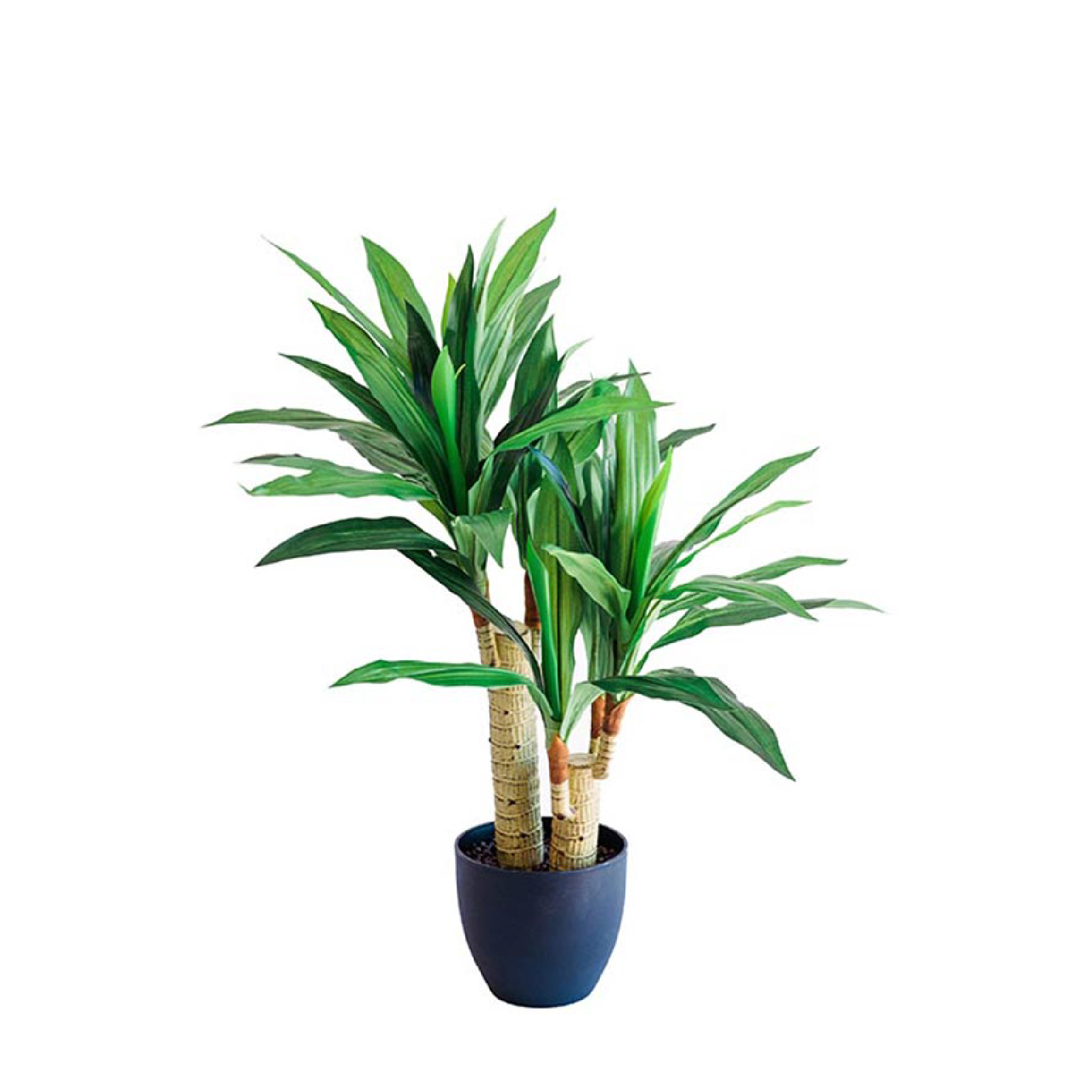 Dracaena 80cm freeshipping - Beautiful Spaces Store