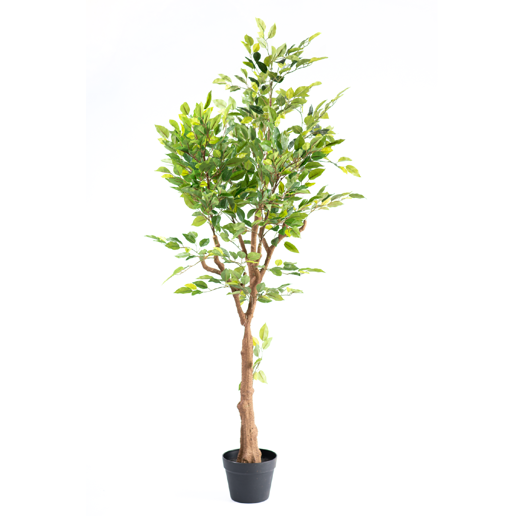 Ficus Mini Tree 135cm freeshipping - Beautiful Spaces Store