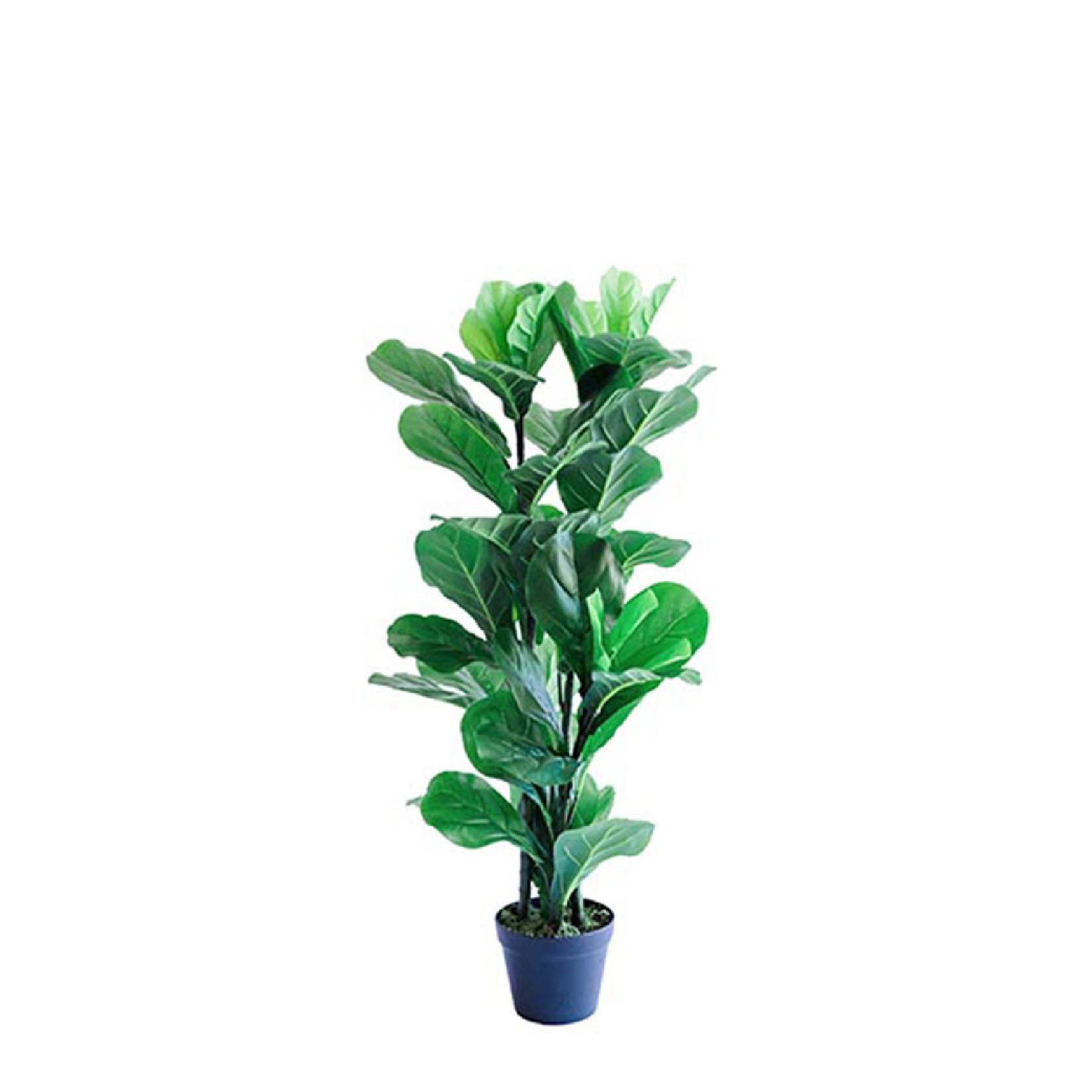 Fiddle Leaf Ficus 87cm freeshipping - Beautiful Spaces Store