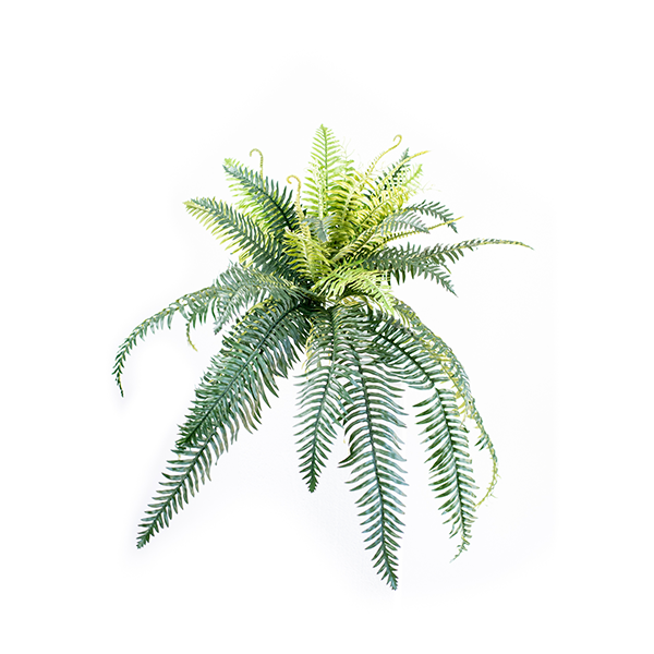 Fern Horse Tail 75cm freeshipping - Beautiful Spaces Store