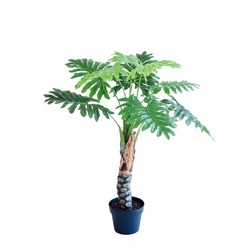 Philodendron 90cm freeshipping - Beautiful Spaces Store