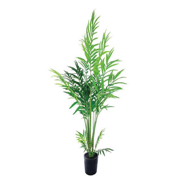 Butterfly Palm 230cm freeshipping - Beautiful Spaces Store