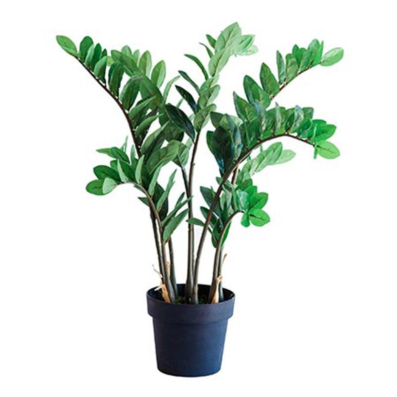 Zamifolia 87cm freeshipping - Beautiful Spaces Store