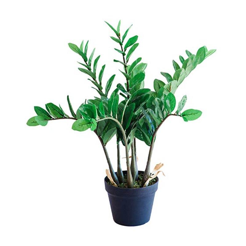 Zamifolia 64cm freeshipping - Beautiful Spaces Store