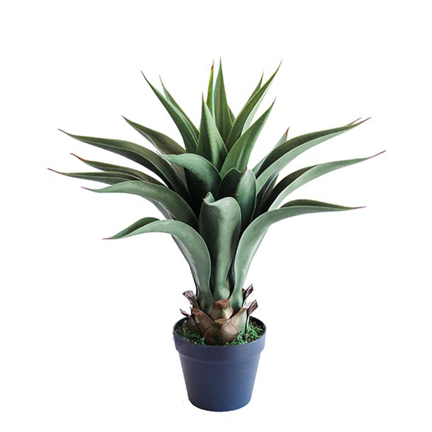 Agave 55cm freeshipping - Beautiful Spaces Store