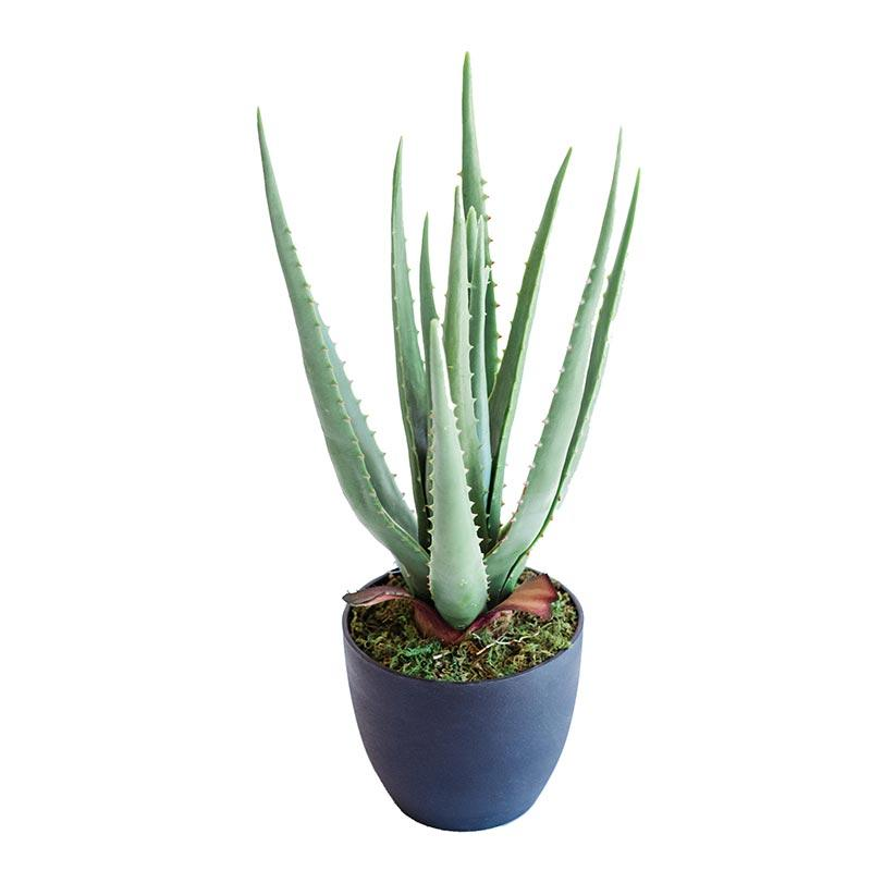 Aloe 44cm freeshipping - Beautiful Spaces Store