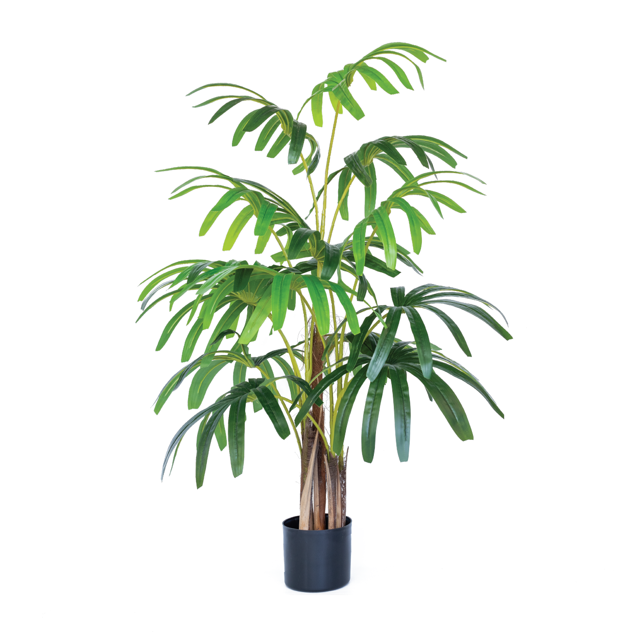 Rhaphis Palm 120cm freeshipping - Beautiful Spaces Store