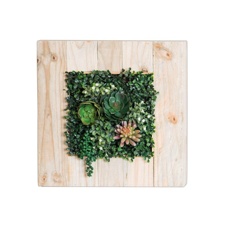 Wall Box Timber with Succulents freeshipping - Beautiful Spaces Store