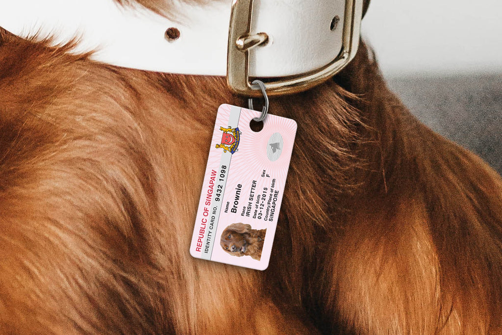Why pets should have an ID tag