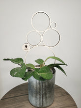 Load image into Gallery viewer, Geometric Plant Trellis - Circles