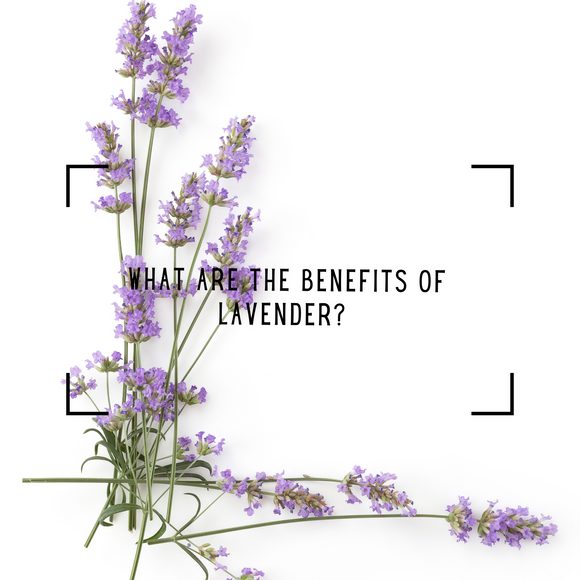 What are the benefits of lavender?