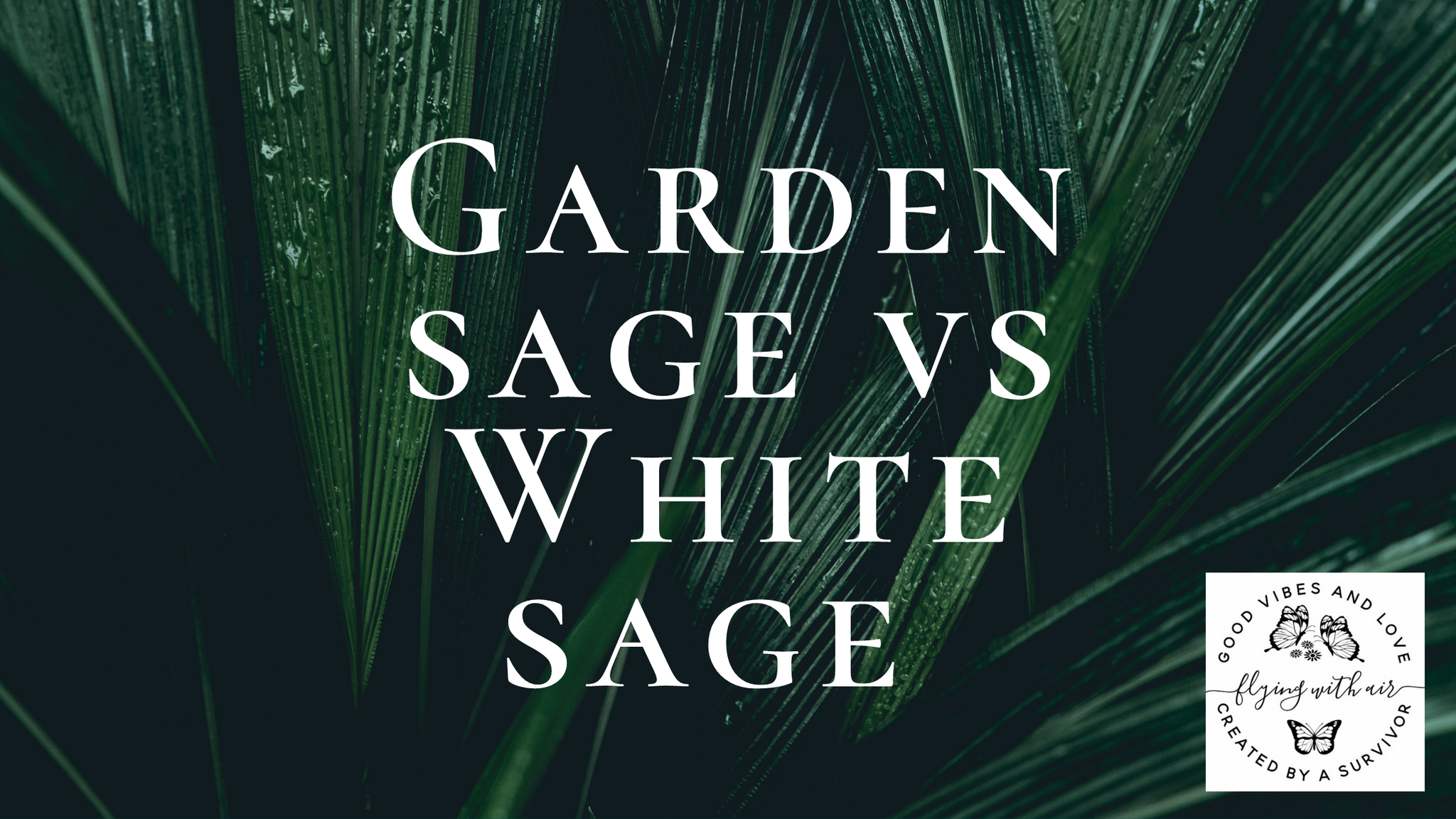 Differences between garden and white sage