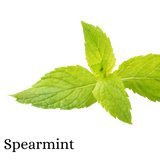 Spearmint (Herb)