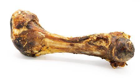BYDB: Elk Femur Marrow Bone