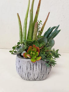 Grey timber look Succulents