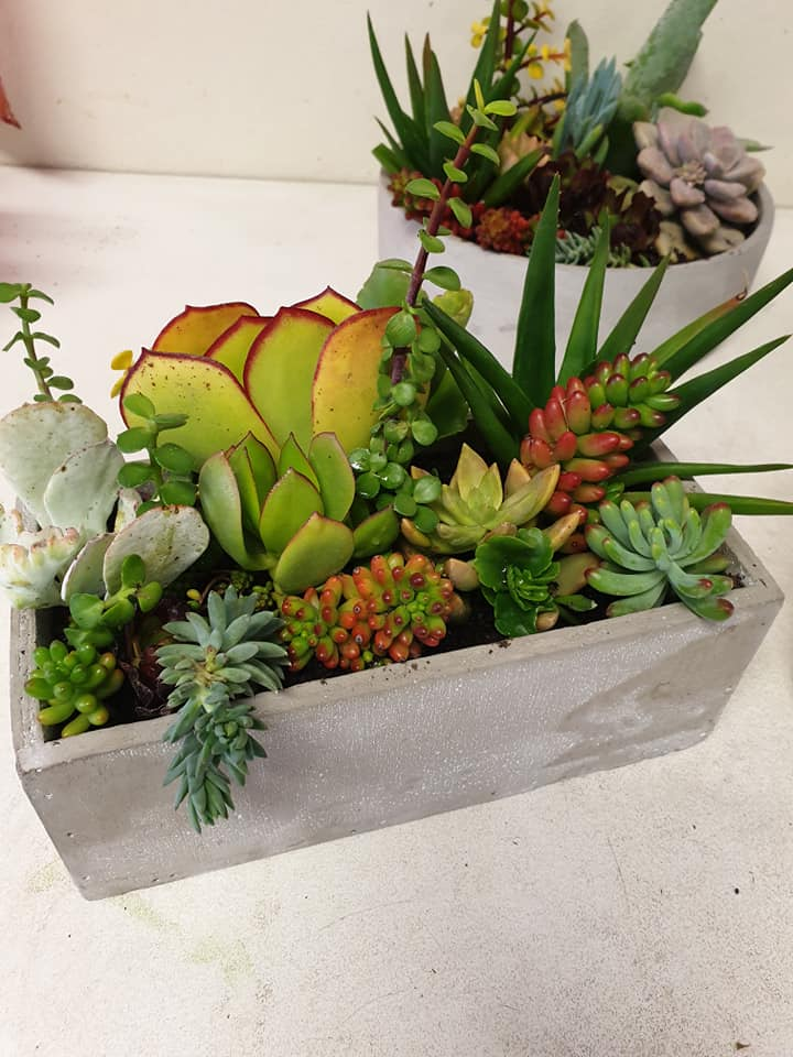 Concrete Rectangle Succulents