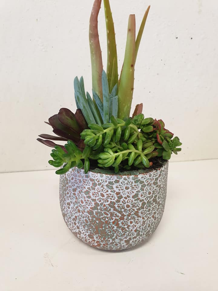 Rose gold on Green ceramic Succulents