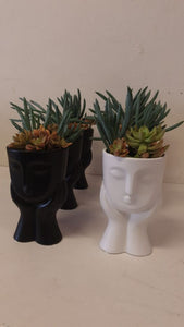 Succulent thinkers