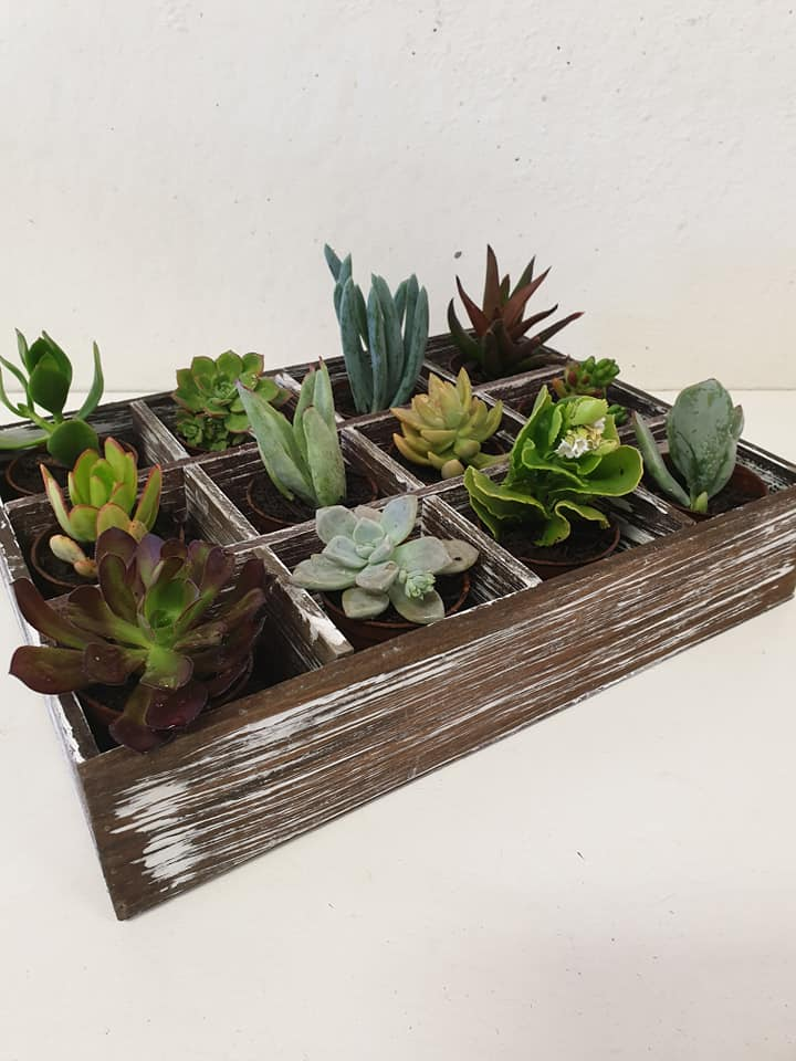 Timber Succulent Tray