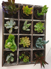 Load image into Gallery viewer, Timber Succulent Tray
