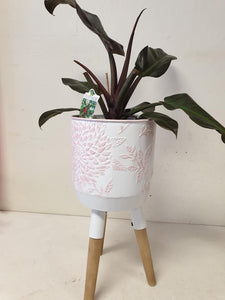 White and pink planter