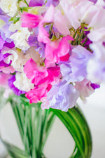 Load image into Gallery viewer, Prismatic Sweet Pea