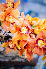 Load image into Gallery viewer, Tangerine Tulips