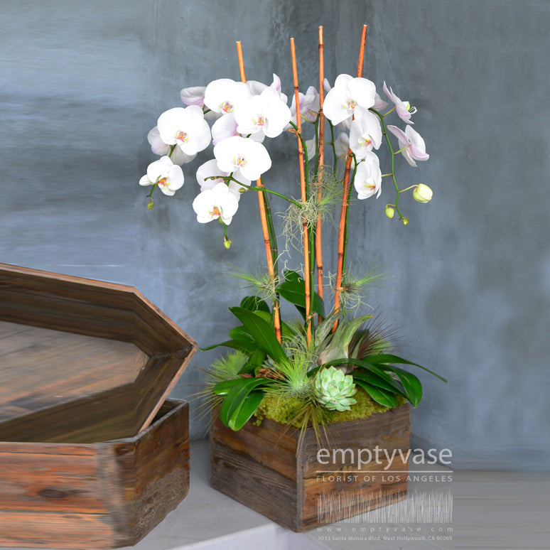Orchids in Wooden Box