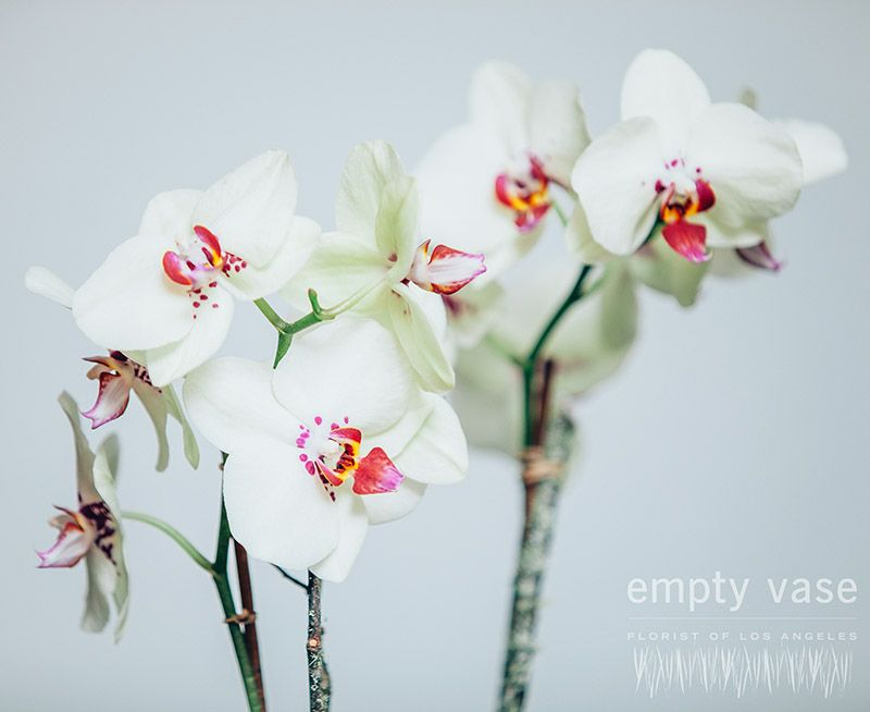 Serenity Orchids