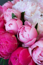 Load image into Gallery viewer, The Peony Trinity
