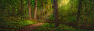 Sacred Grove Large Art