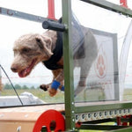 Fitness First Standard Dog Treadmill