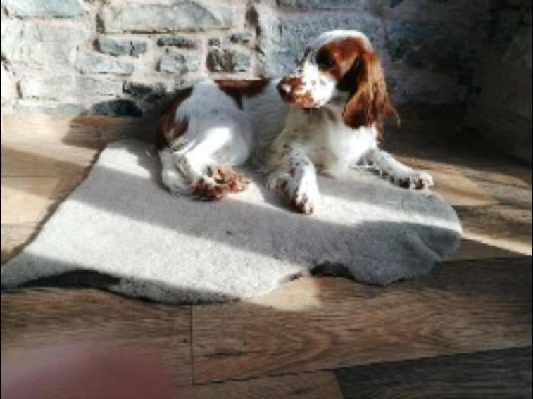Sustainable Sheepskin Slumber Rug