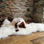 Winter Wonderland Sheepskin White Rug