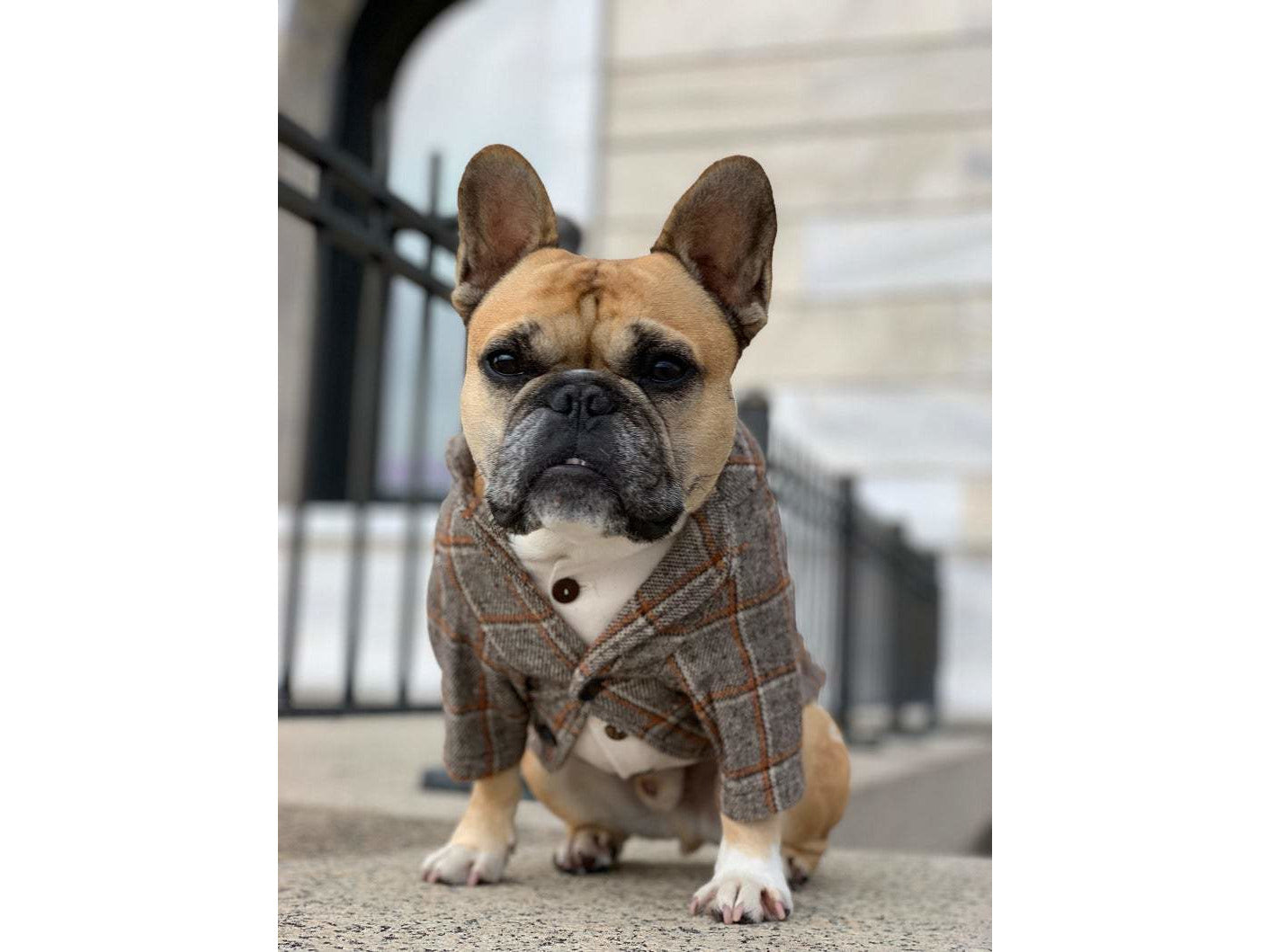 Autumn Tweed Blazer Set for Dogs
