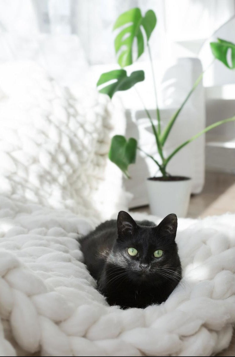 Ultra-Soft Merino Wool Pet Blanket