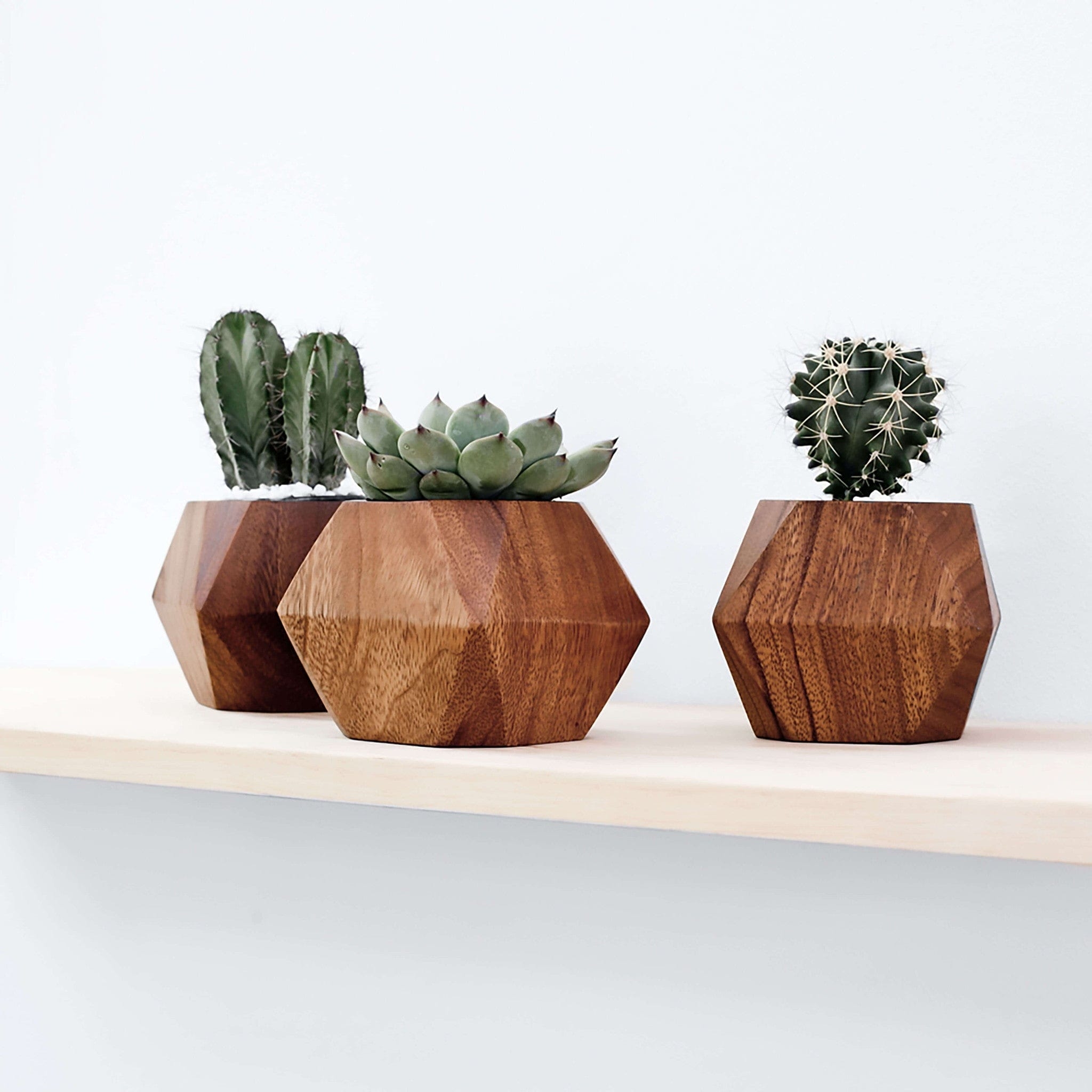Modern Succulent Planters Handcrafted In Uganda The Citizenry