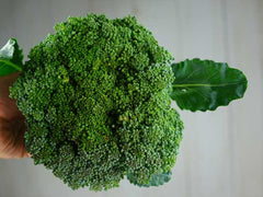 Waltham 29 Broccoli (300 seeds)