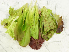 Red Wing Lettuce Mix Salad Blend (1000 seeds)