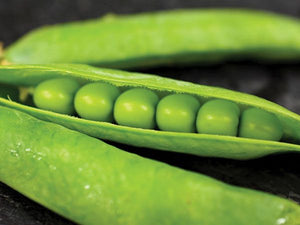 Laxton's Progress No. 9 Garden Pea (75 seeds)