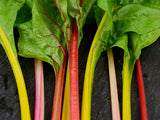 Five Color Silverbeet Swiss Chard (100 seeds)