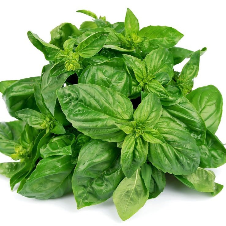 Organic green basil - bunch