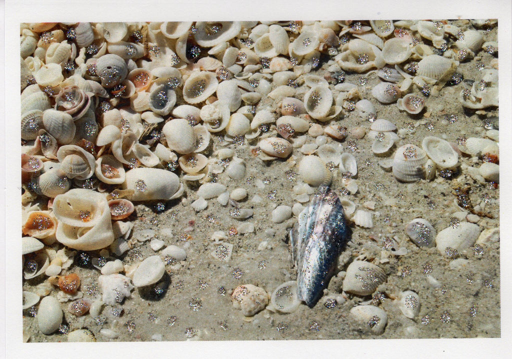 Abalone & Beach Shells Photo Card