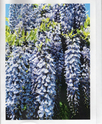 Wisteria Bunches Glitter Photo Card