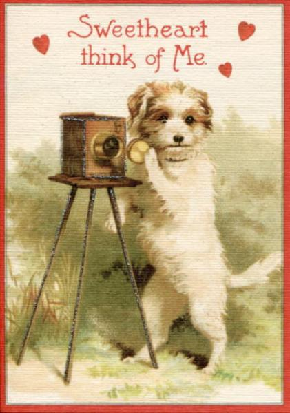 Valentine Dog with Camera