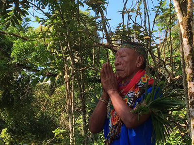 How Shamans Have Used the Magical Powers of Plants for Centuries