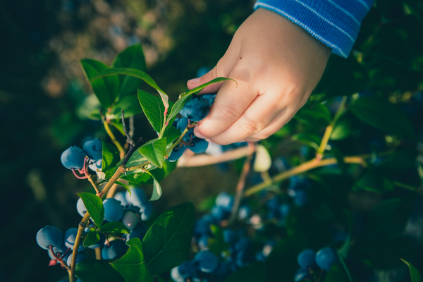 Nurturing nature at a tender age: How kids benefit from gardening